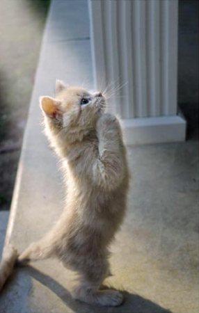 Le rêve du petit chat