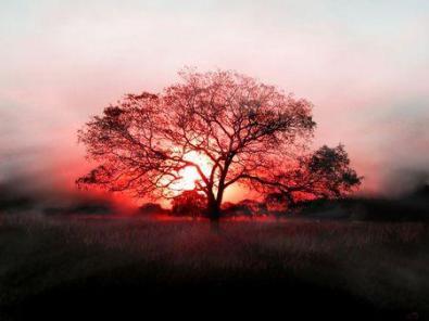 L'arbre de vie ; un plan d'évolution de la conscience