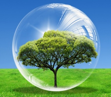 L'arbre cosmique et son halo d'influence