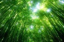 Conscience de l'écosystème de notre Terre