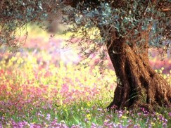 L'Echo des évènements du jardin d'Eden